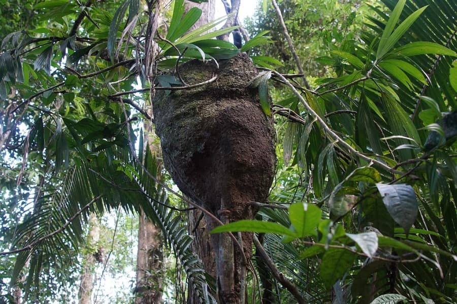 Перу Амазонки Джунгли фото