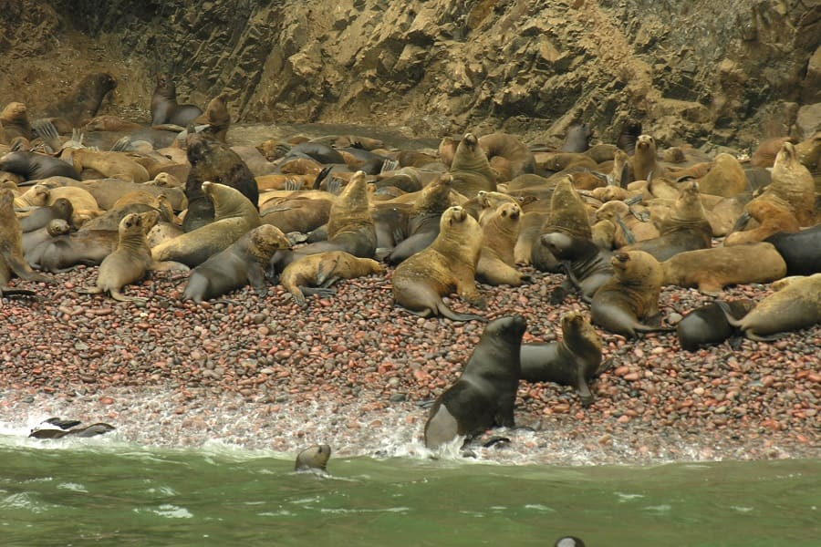 островах Байестас морские котики фото