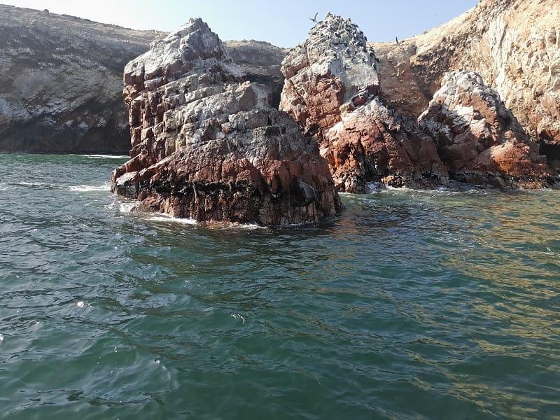 Перу острова Байестас фото