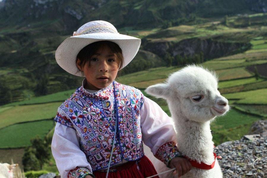 Перу путевка девочка с викуньей