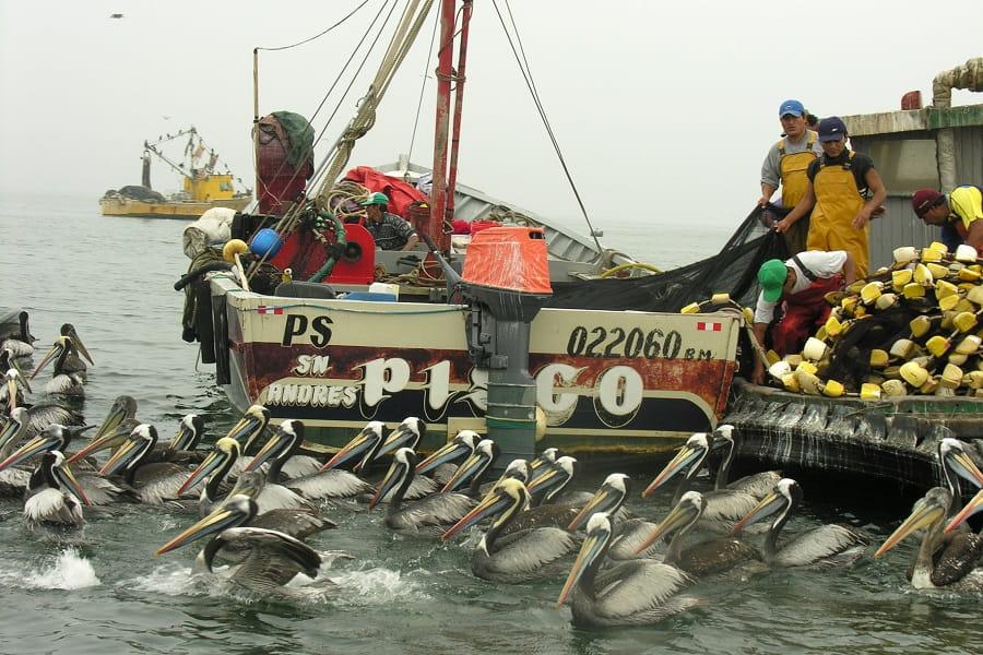 Перу Паракас порт фото