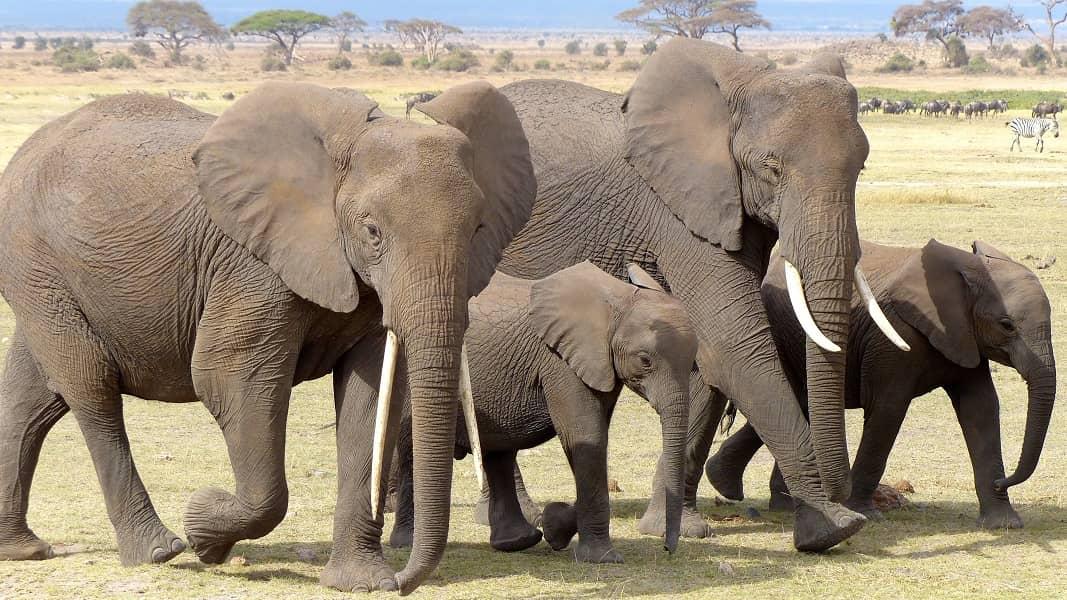 Туры в Танзанию. Парк Нгоро Нгоро. Семейство слонов
