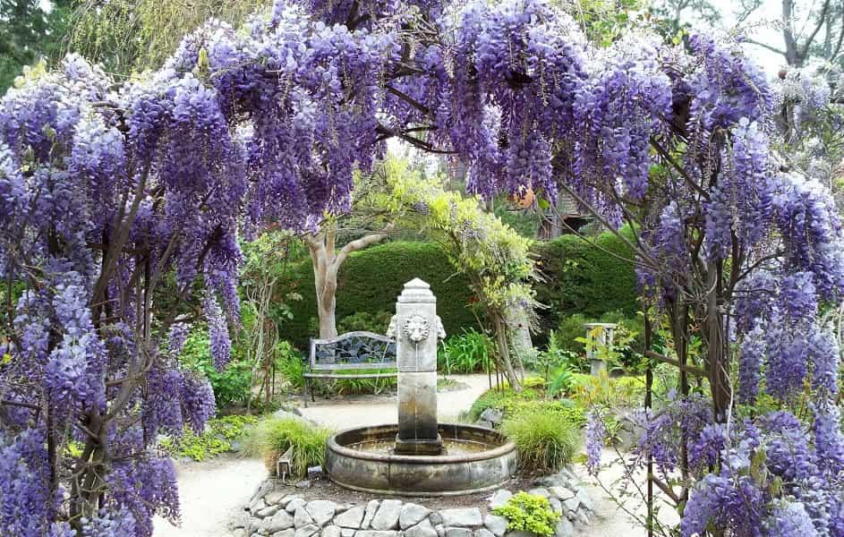 Туры в Японию на цветение глициний