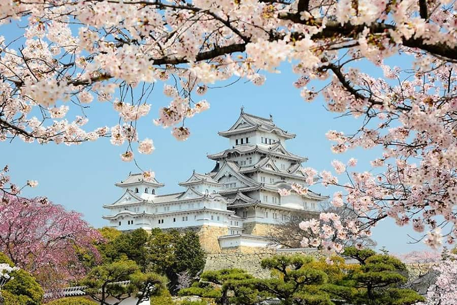 Туры в Японию. Осакский замок в цвету сакуры
