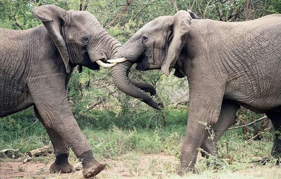 Туры в ЮАР. Сафари в Парке Крюгера. Слоны